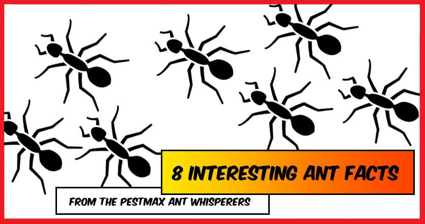 The Ant Whisperers