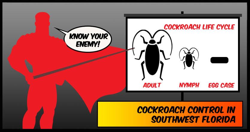 Cockroach Control Naples, FL