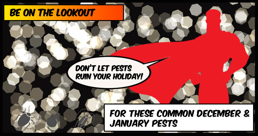 December and January Pests in Florida