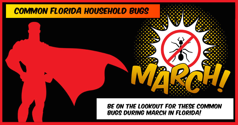 Common Florida Household Bugs to be on the lookout for in March