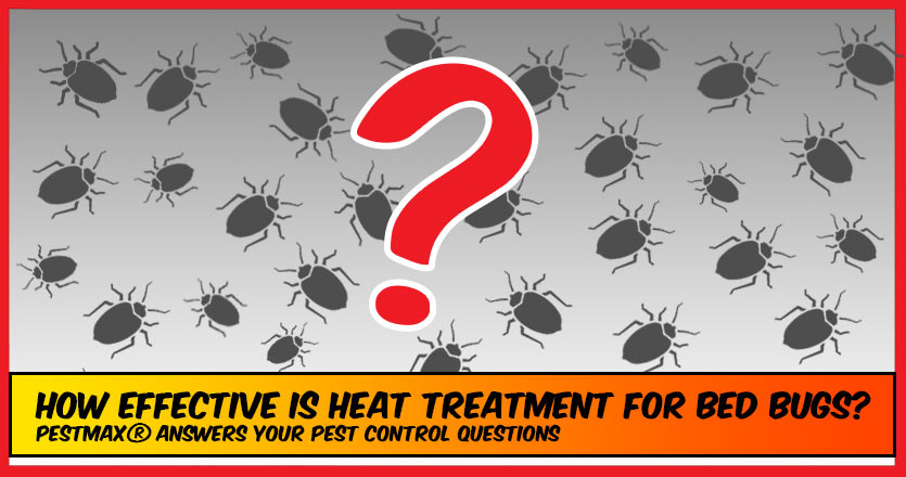How effective is heat treatment for bed bugs?