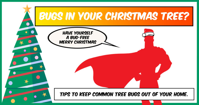 Does your Christmas Tree have bugs?