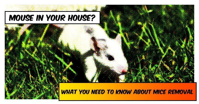 Dealing with a mouse in your house? Here's what you need to know about mice removal.