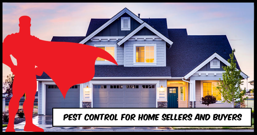 Pest Control when Selling or Buying a Home