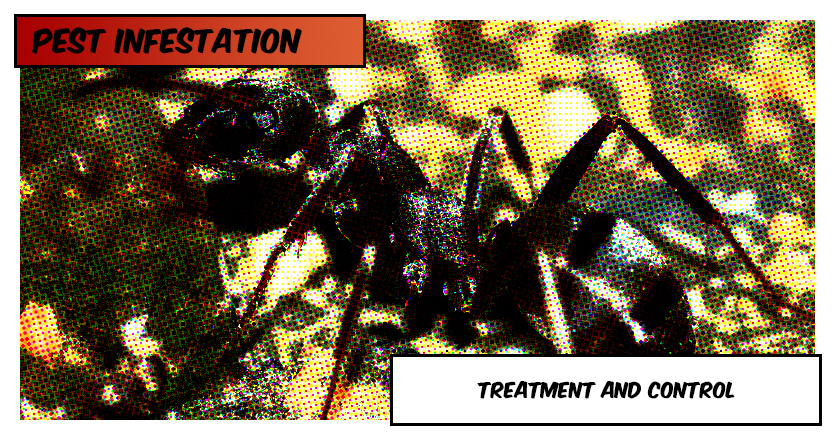 Flea Infestation: Treatment & Control
