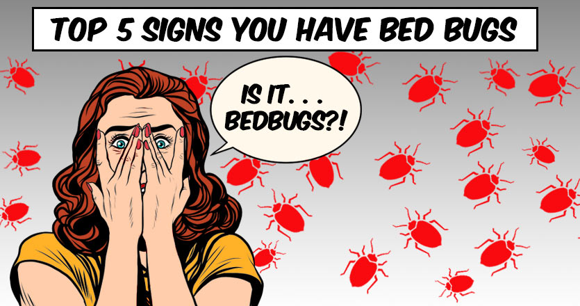 Top Signs You Have Bed Bugs