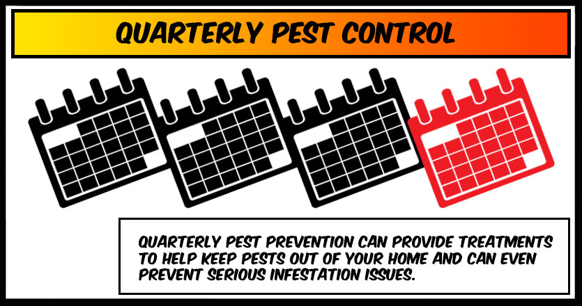 Quarterly Pest Control – Is it worth it and do I need it?