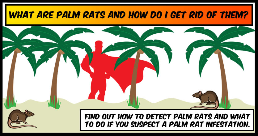 What are Palm Rats and how do I get rid of them?